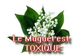 Le muguet : attention, plante toxique !